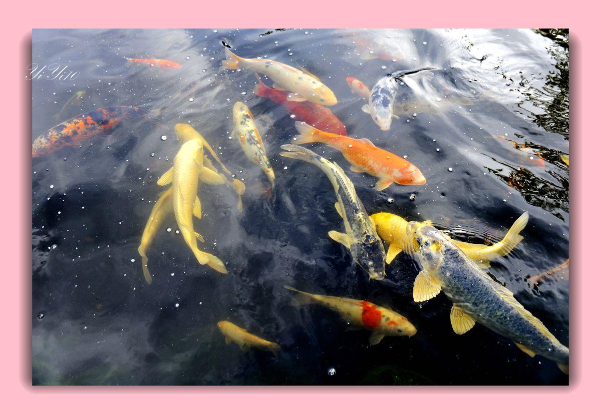 【原创】鱼池与喷水器(摄影)_图1-4