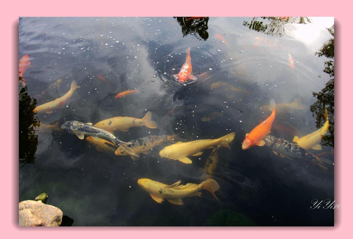 【原创】鱼池与喷水器(摄影)_图1-3