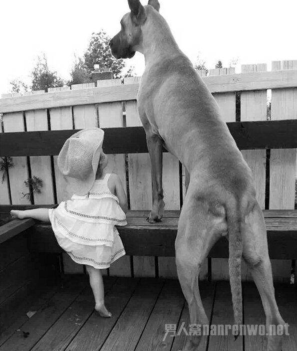 这么大的狗,你绝对没见过!_图1-16