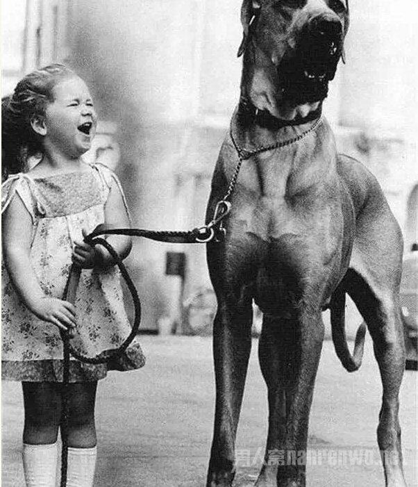 这么大的狗,你绝对没见过!_图1-7