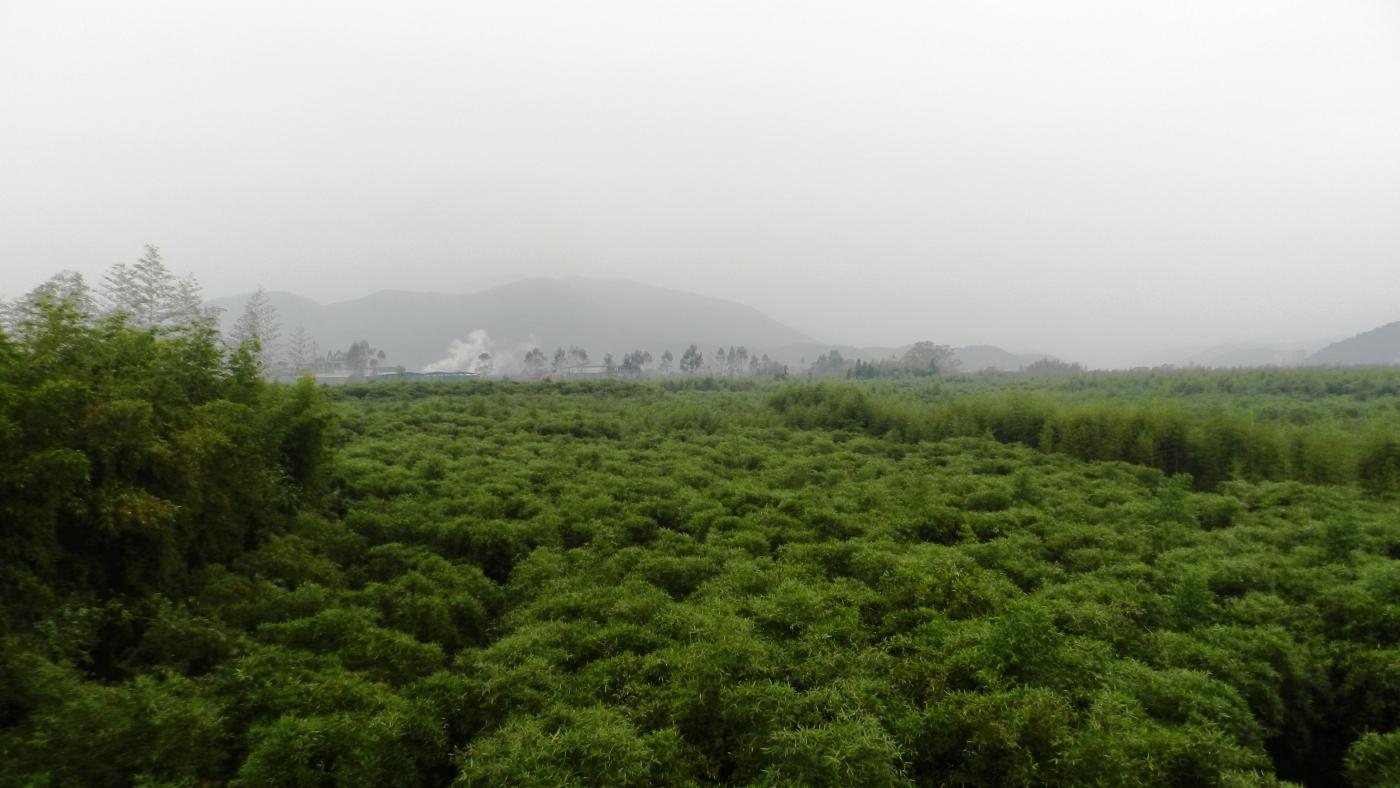 【汉良子】承载乡愁的地方---福建顺昌来布村(美丽乡村之二十五) ..._图1-19