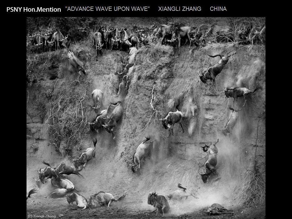 纽约摄影学会2015年国际沙龙比赛单色部分获奖作品_图1-15
