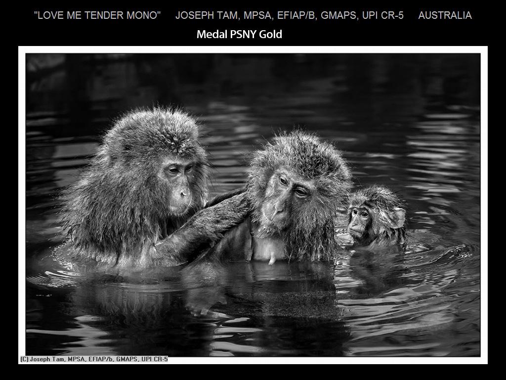 纽约摄影学会2015年国际沙龙比赛单色部分获奖作品_图1-20
