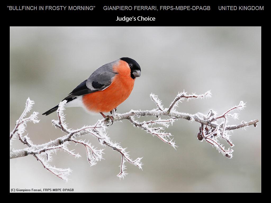 上帝的杰作-自然世界之美_图1-9