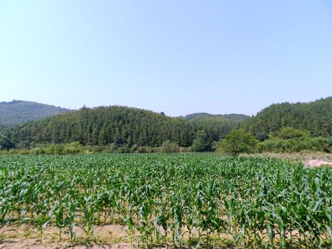 【汉良子】承载乡愁的地方---建阳考亭村(美丽乡村之二十九) ..._图1-13