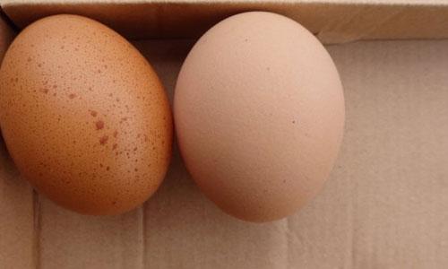 【福萊沃東方原創】這種殼的雞蛋千萬別買回家_图1-1