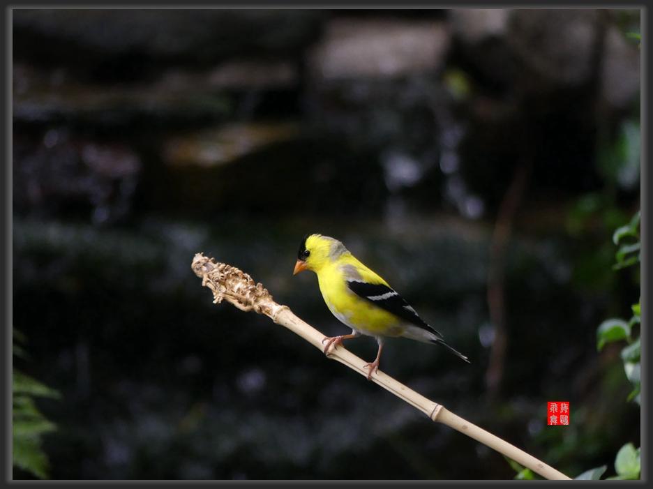 小机摄鸟-lumix dmc-fz300_图1-1