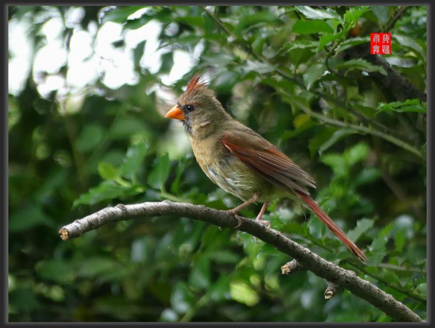 小机摄鸟-lumix dmc-fz300_图1-3