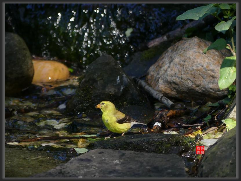 小机摄鸟-lumix dmc-fz300_图1-6