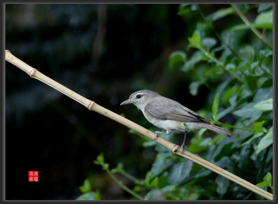小机摄鸟-lumix dmc-fz300_图1-7