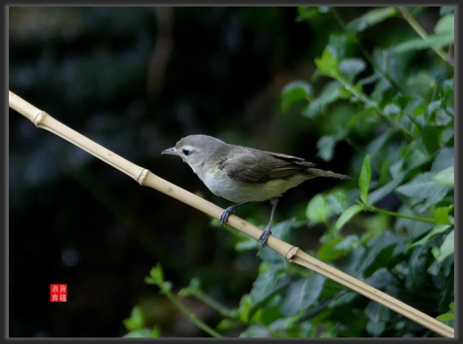 小机摄鸟-lumix dmc-fz300_图1-8