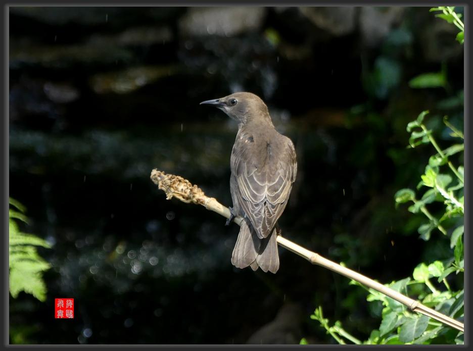 小机摄鸟-lumix dmc-fz300_图1-9