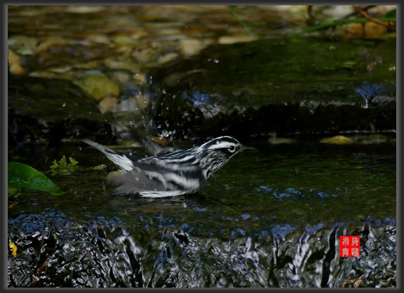 小机摄鸟-2_图1-3