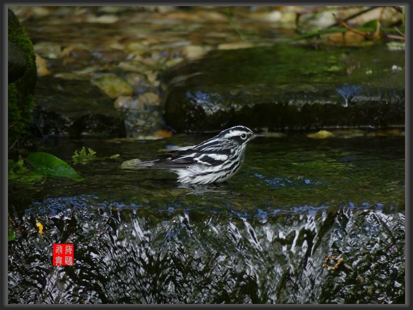 小机摄鸟-2_图1-4
