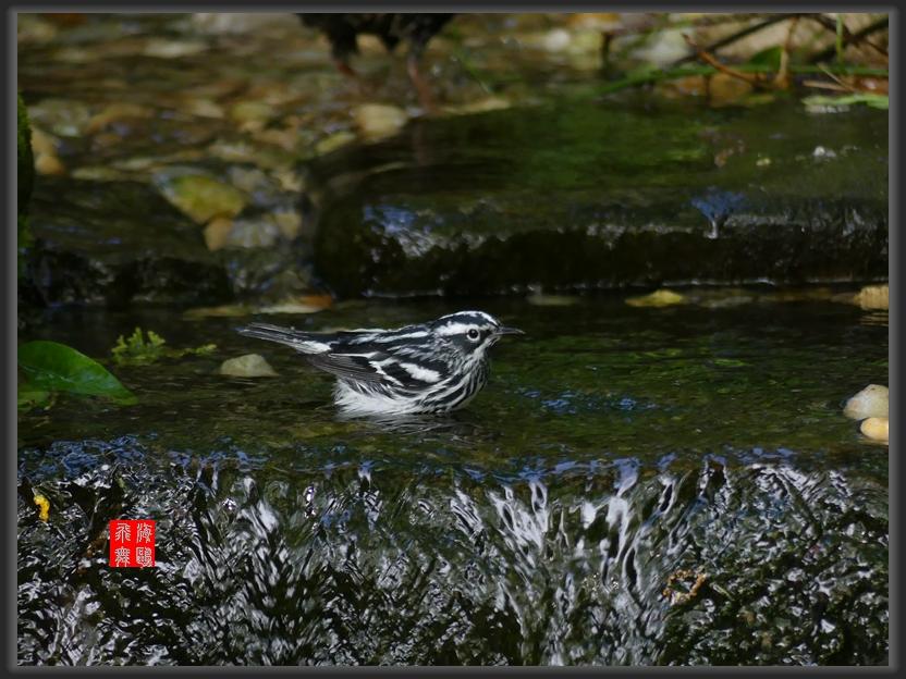 小机摄鸟-2_图1-5