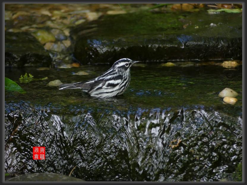 小机摄鸟-2_图1-6