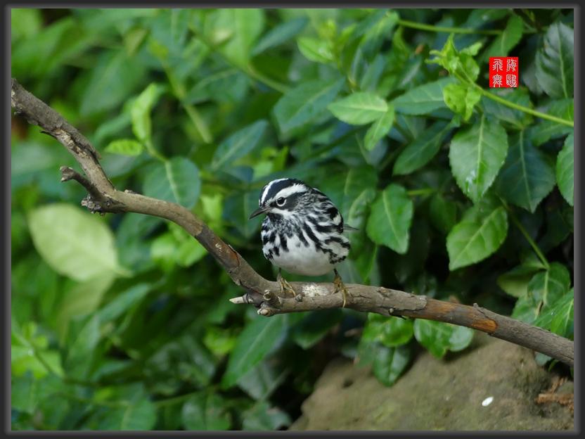小机摄鸟-2_图1-7