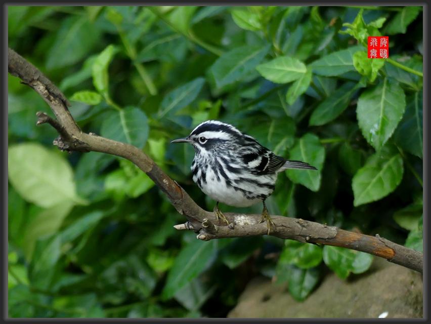 小机摄鸟-2_图1-8