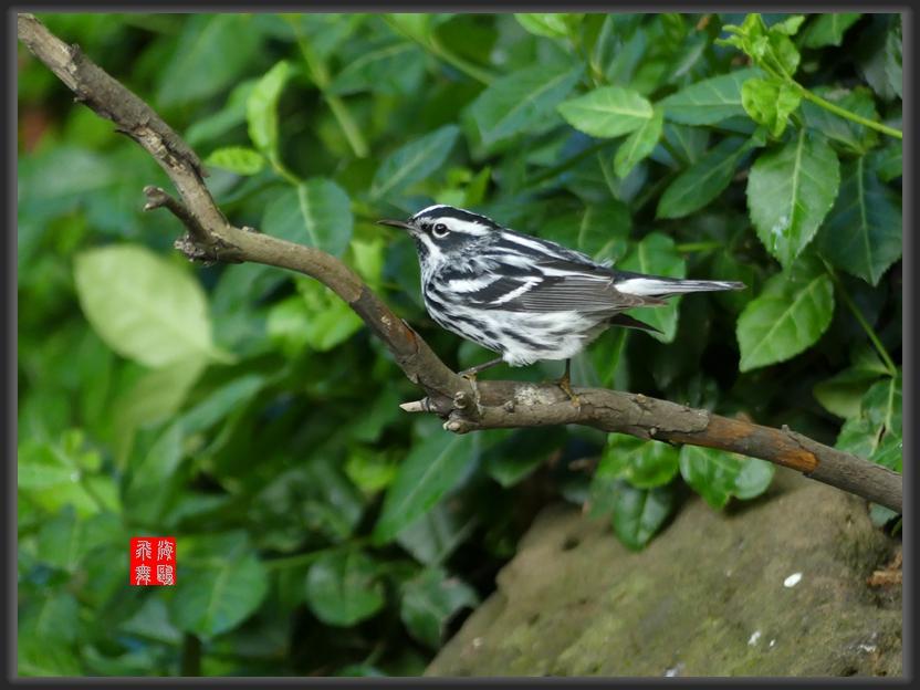 小机摄鸟-2_图1-9