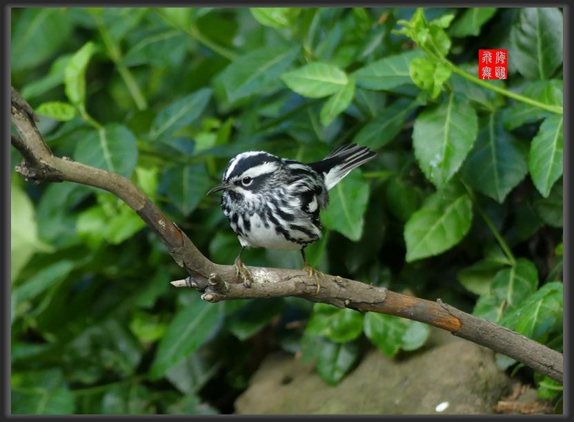 小机摄鸟-2_图1-10