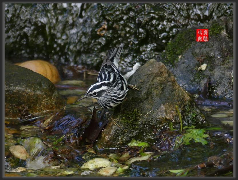 小机摄鸟-2_图1-11