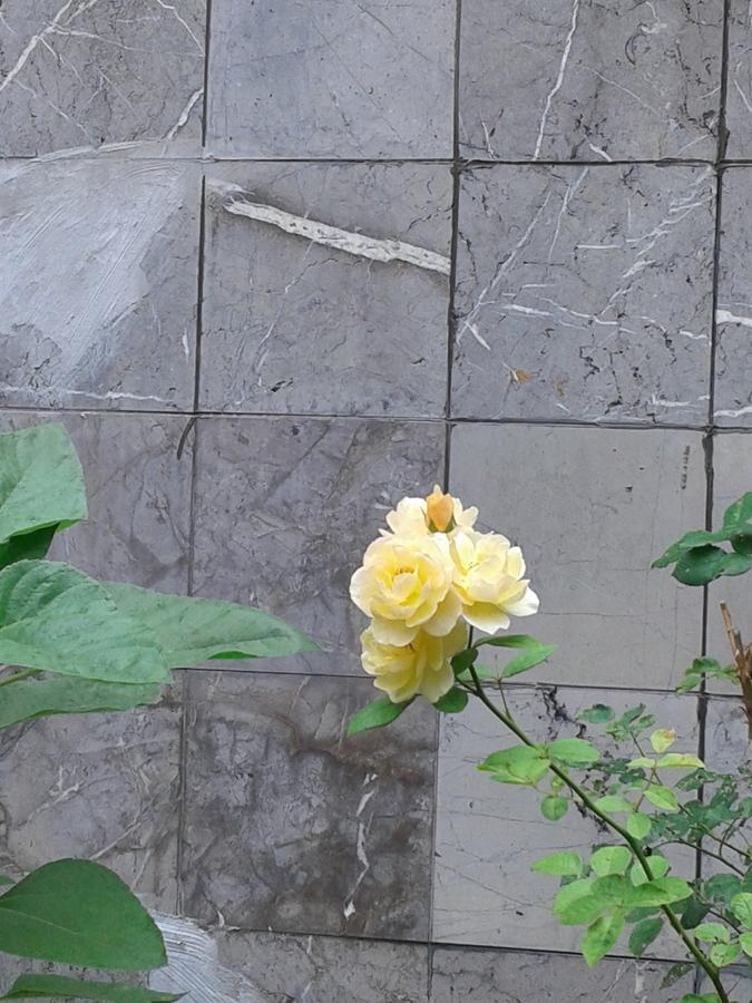 鄰家的花園_图1-19