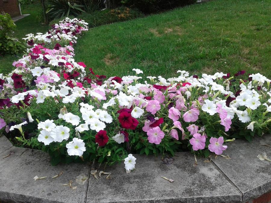 鄰家的花園_图1-5