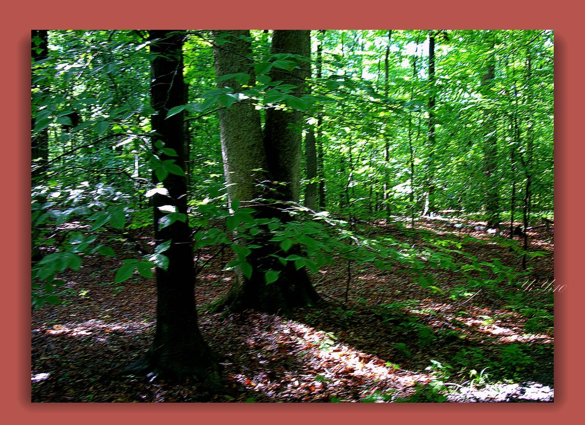 【原创】在大自然的绿色之中(摄影)_图1-13