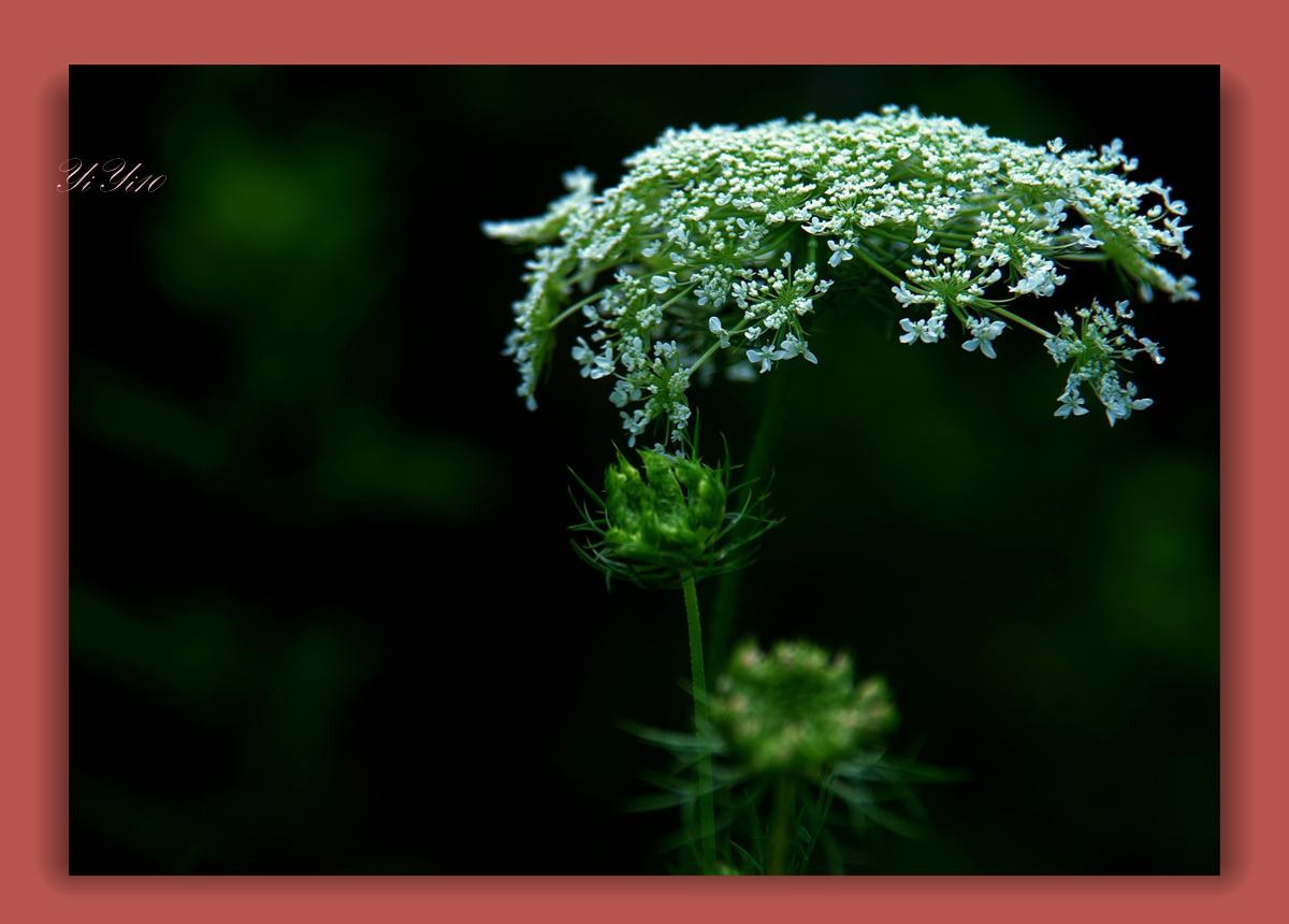 【原创】在大自然的绿色之中(摄影)_图1-10