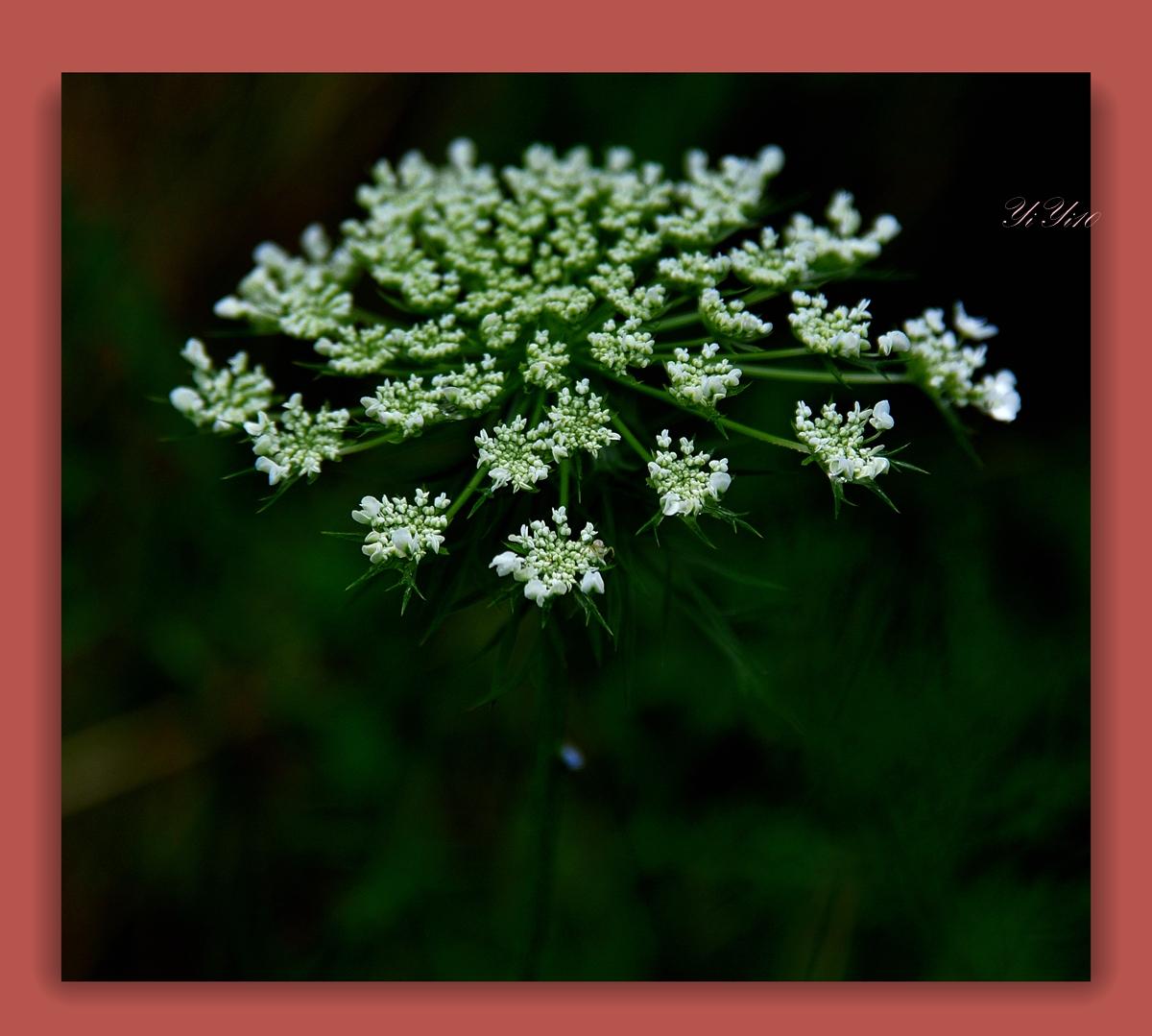 【原创】在大自然的绿色之中(摄影)_图1-12