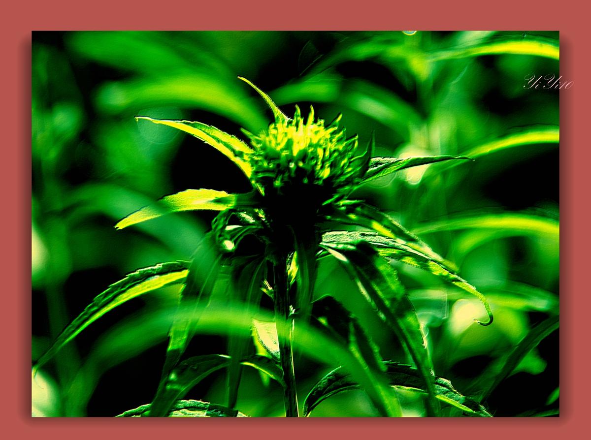 【原创】在大自然的绿色之中(摄影)_图1-11