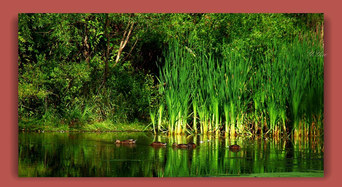 【原创】在大自然的绿色之中(摄影)_图1-9