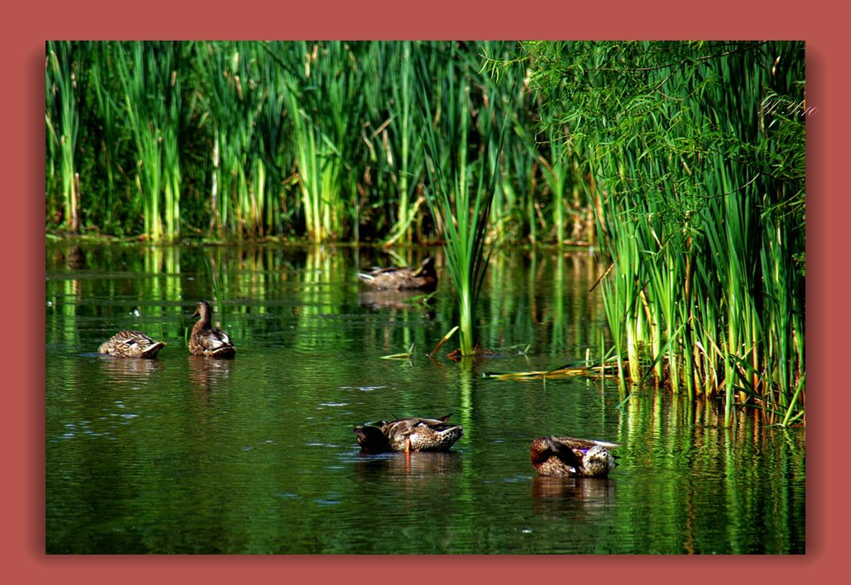 【原创】在大自然的绿色之中(摄影)_图1-4