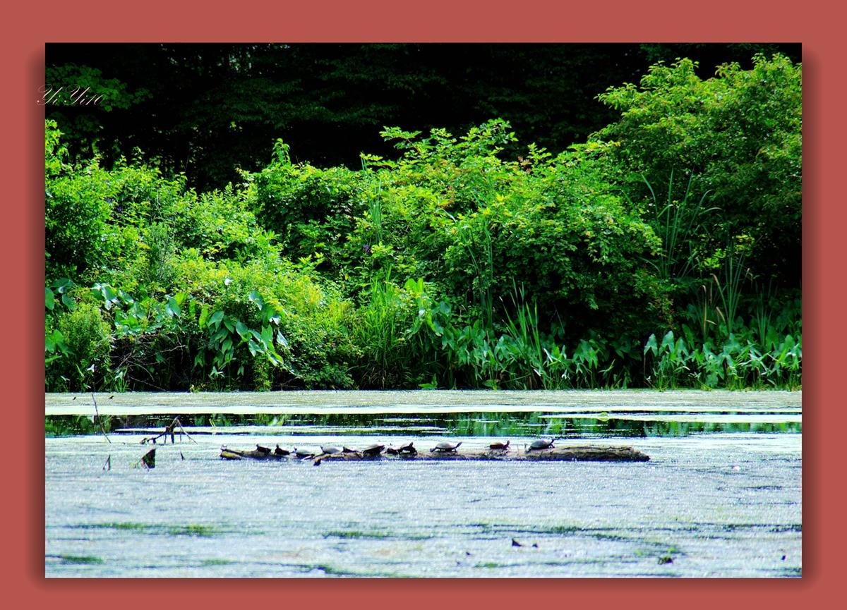 【原创】在大自然的绿色之中(摄影)_图1-15