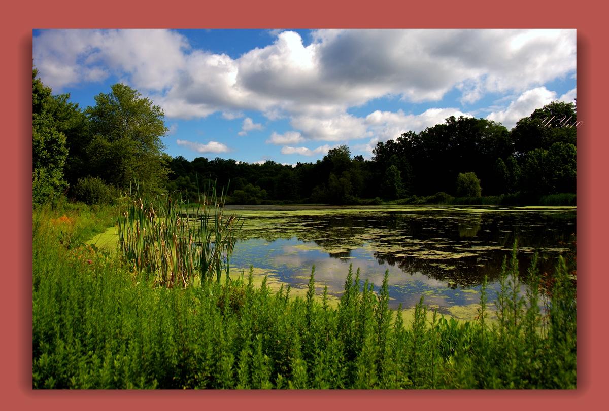 【原创】在大自然的绿色之中(摄影)_图1-14