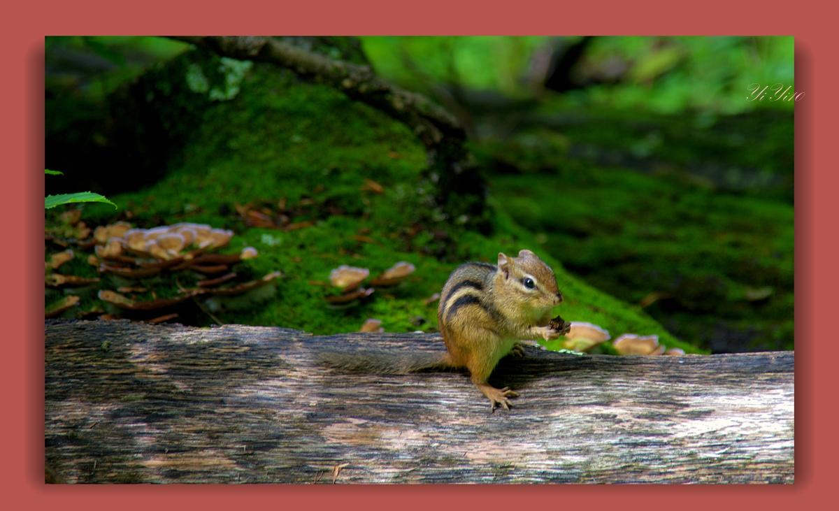 【原创】在大自然的绿色之中(摄影)_图1-7