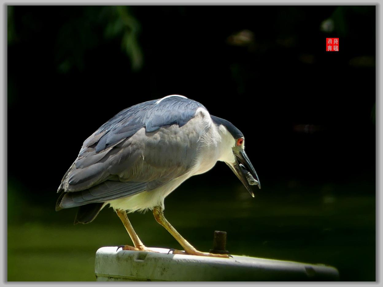 小机摄鸟-4_图1-2