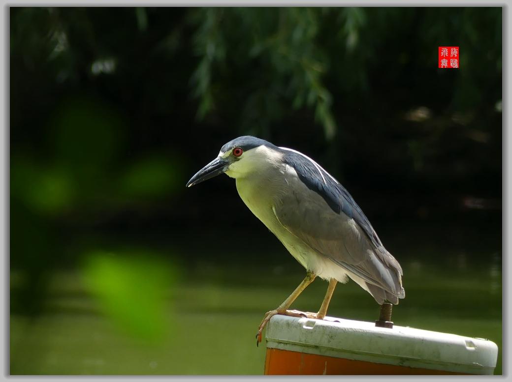 小机摄鸟-4_图1-3