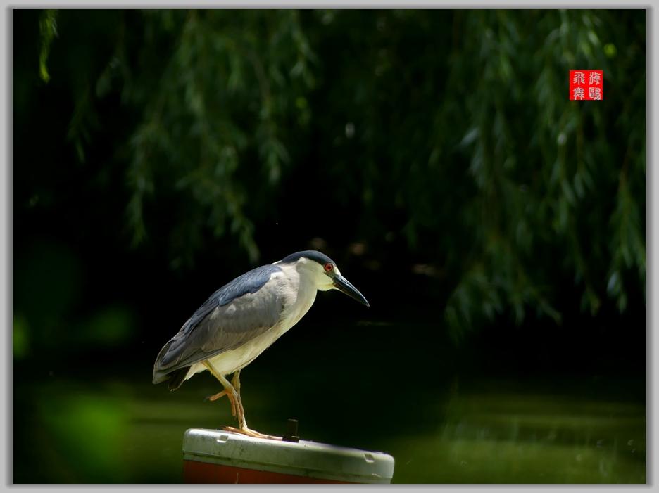 小机摄鸟-4_图1-4