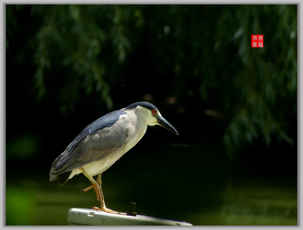 小机摄鸟-4_图1-5