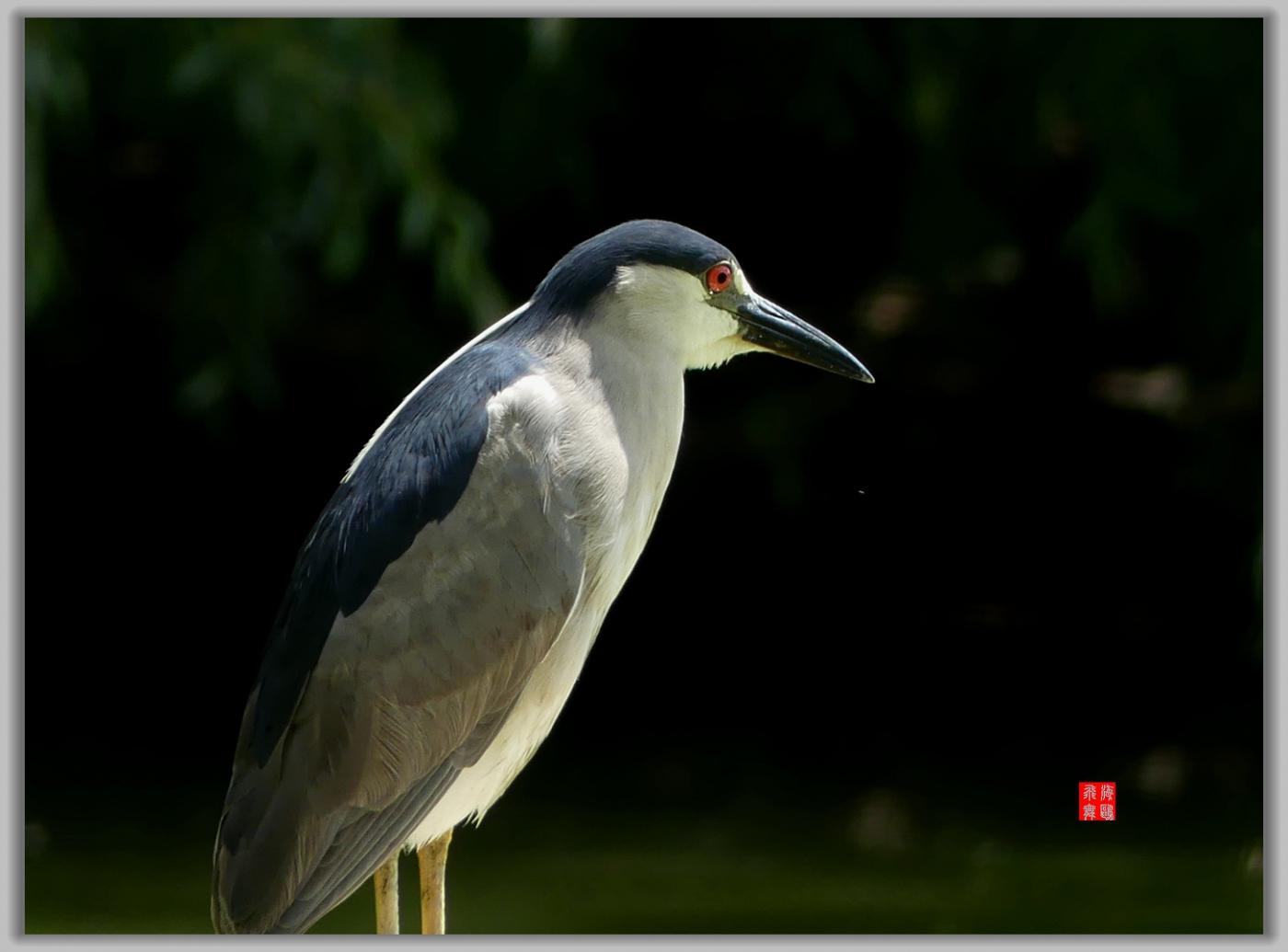 小机摄鸟-4_图1-7