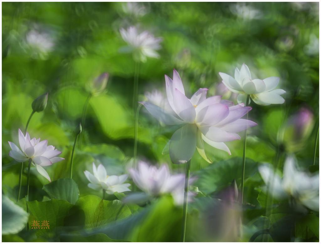 夏日里的风景_图1-4