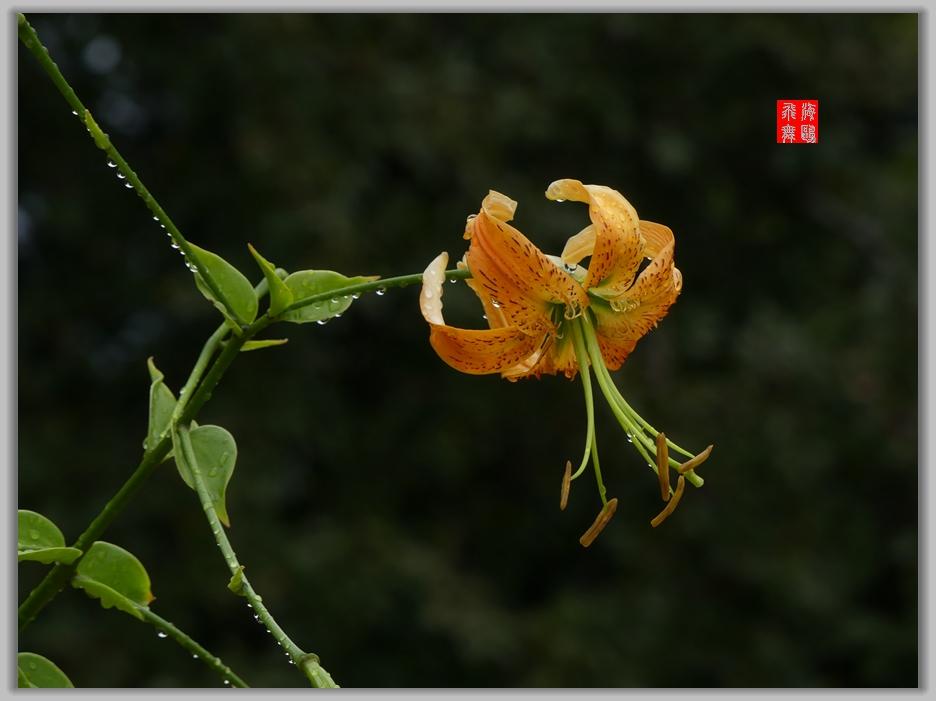 小机摄花-2_图1-1