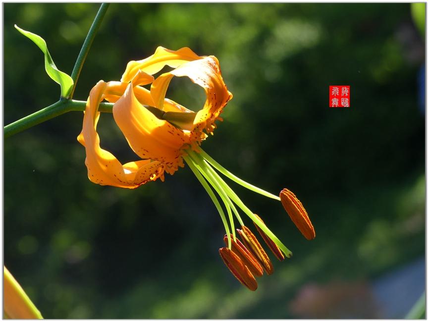 小机摄花-2_图1-7
