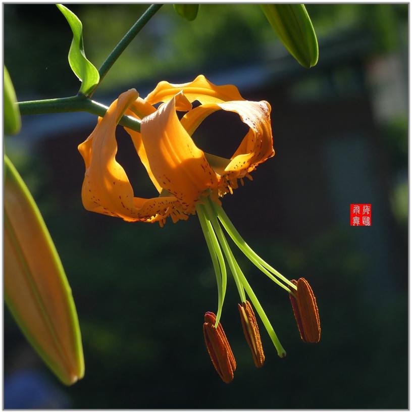 小机摄花-2_图1-9