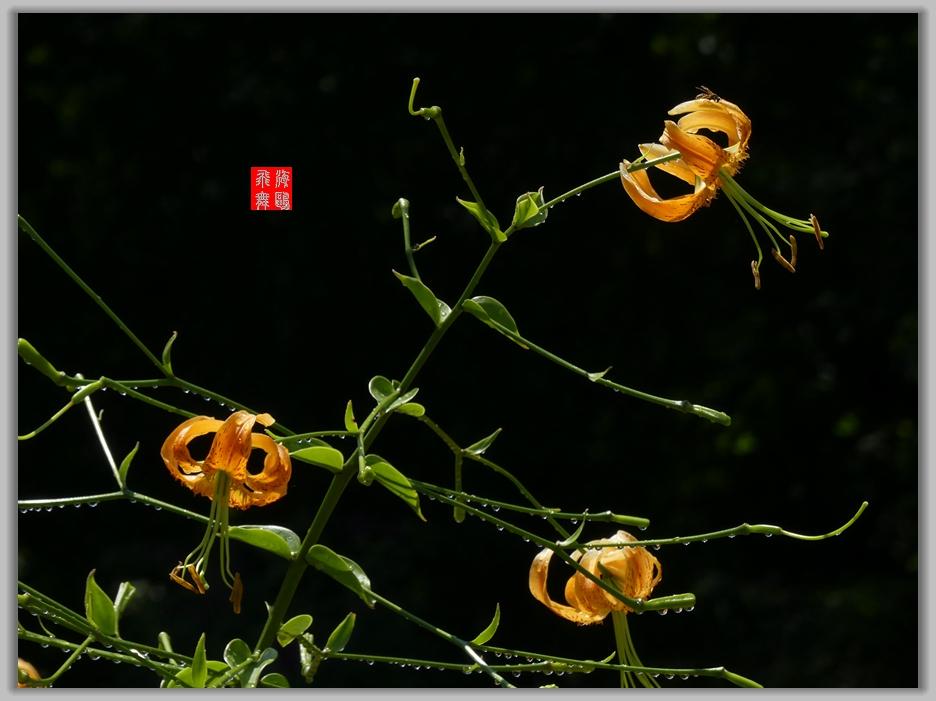 小机摄花-2_图1-10