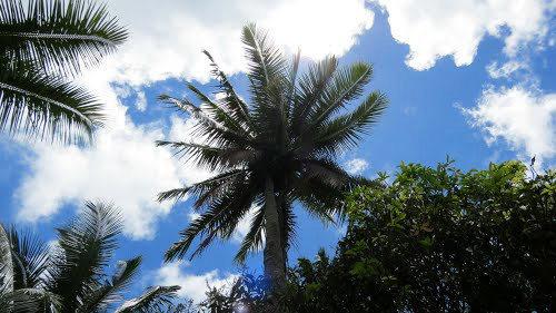 库克群岛   2