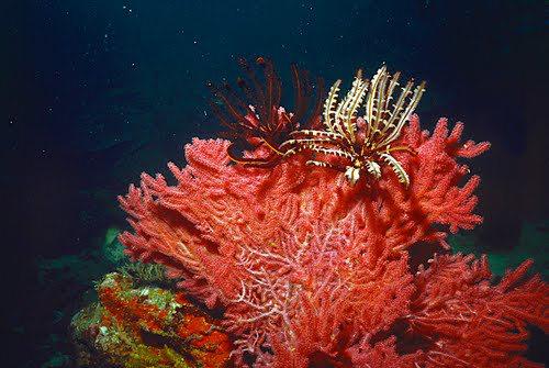 帛琉群岛    1_图1-1