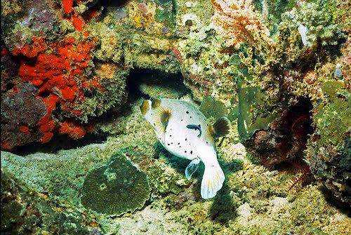 帛琉群岛    1_图1-3
