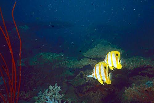 帛琉群岛    1_图1-5